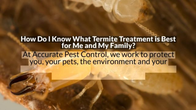 Who Do I Call for Termites in Weston | Accurate Pest Control Inc.