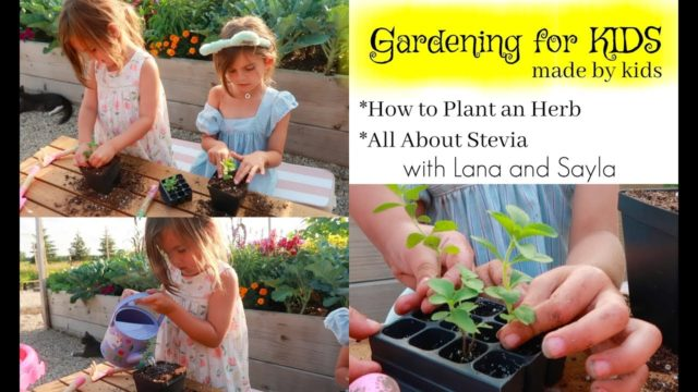 Gardening for Kids, 'How to Plant an Herb, Stevia'