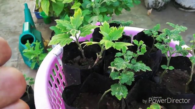 Winter Mein apne Plants Ki Care k liye In Chizo Ka Dyan Rakhiye, Care of Plants In winters