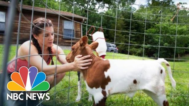 How Student Debt Is Crippling Young Farmers And The Future Of Agriculture | NBC News
