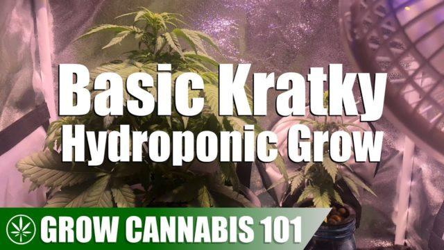 Timelapse Mason Jar Kratky Hydroponic Grow