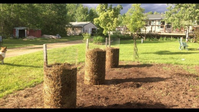 Growing Potatoes in Towers – Small Space Potato Planters