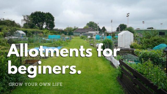 Allotments for beginners – vegetable gardening