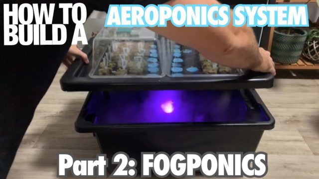 How to Build an Aeroponics System Part 2: Fogponics