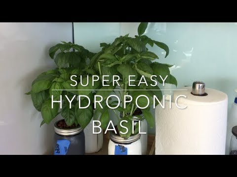 Hydroponic Basil Full Tutorial