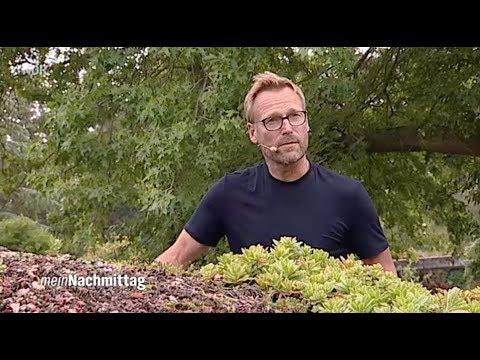 NDR Mein Nachmittag – Dachbegrünung, wie geht das?