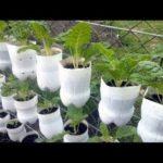 Best ideas! – Brilliant Ways To Reuse Plastic Bottles Garden