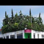 Rooftop Gardens & Terraces