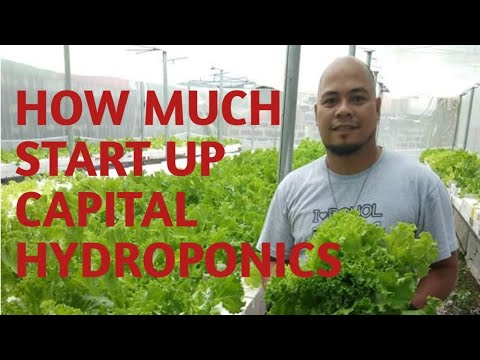 SNAP HYDROPONICS START UP COSTS | Puhunan sa Hydroponics Farming