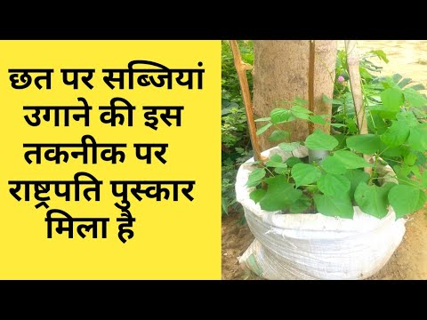 how to grow vegetable in rooftop