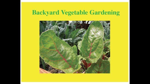 Backyard Vegetable Gardening in Montana