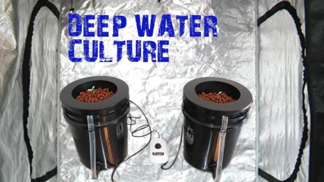 How to Build an Easy Hydroponic Deep Water Culture DWC Bucket System