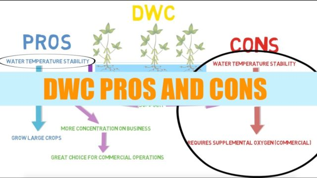 DWC Pros And Cons | Aquaponics