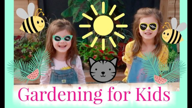 Seeding for Kids | Gardening for Kids | the Window Garden | Seed Starter Kit for Kids