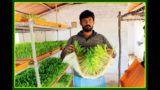 ஹைட்ரோபோனிக்ஸ் பற்றிய விளக்கங்கள் – Hydroponics Fodder Cultivation FAQ
