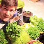 Hydroponic Lettuce Harvest – MASSIVE SUCCESS!