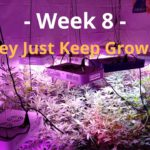 Cannabis Indoor Gardening #8 – They Just Won't Stop Growing!