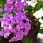Foliar Spray Fertilizer For Winter Plants for more Blooms  ||Winter Plants k liye Fertilizer||