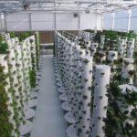Aeroponic tower farm green house.