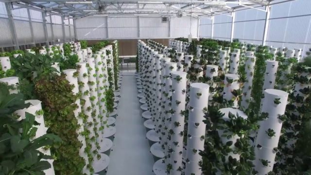 Aeroponic tower farm green house.