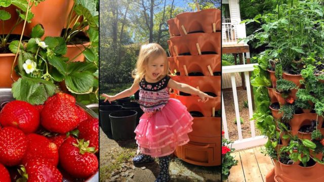 Beautiful gardeners and organic harvests: 125+ Garden Tower growers share their photos:
