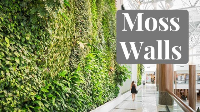 How to Build Your Own Moss Wall – Part Two