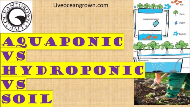 Aquaponics vs Hydroponics vs Soil gardening advantages and disadvantages