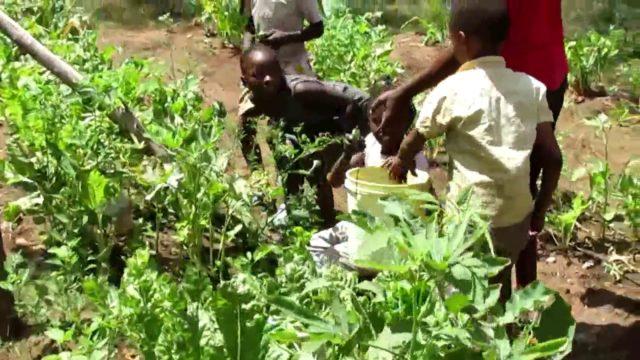 Inside School: Gardening