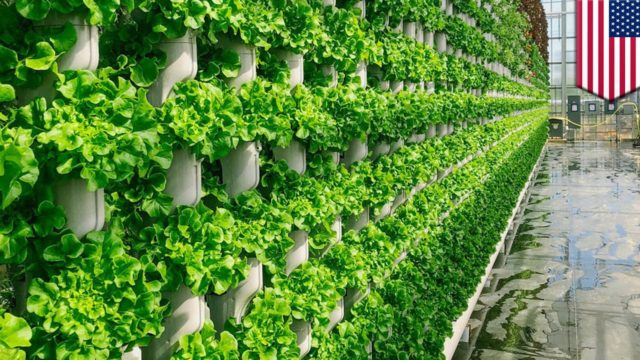 Vertical farming firm to grow produce for North Texas – TomoNews