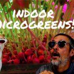 Indoor gardening for beginners / Easy DIY Hydroponics / Easy hydroponic grow tent