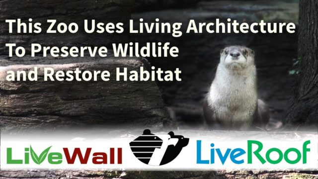 Wildlife Habitat Restoration at John Ball Zoo through Green Roofs and Living Walls