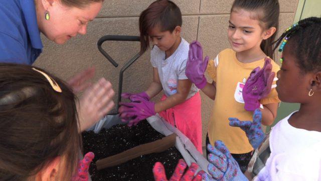 School Gardens Jones & Arizona