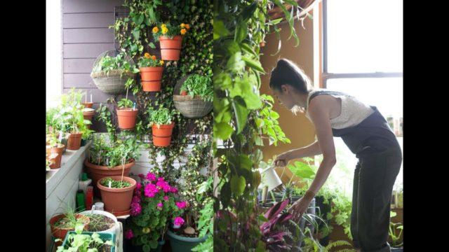 Vertical Gardening Ideas for Small Garden and Balcony