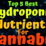Best Hydroponic Nutrients For Cannabis