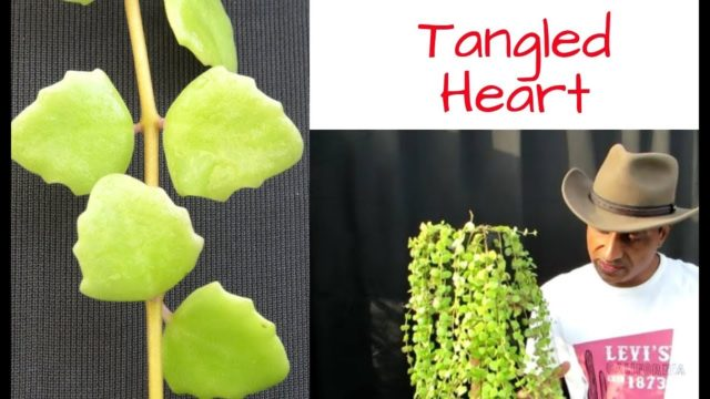 Succulent Vine Tangled Heart / Care and lot more
