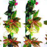 Plastic Bottles Vertical Garden at Home | Plastic Bottles Tower Garden on Wall//GREEN PLANTS