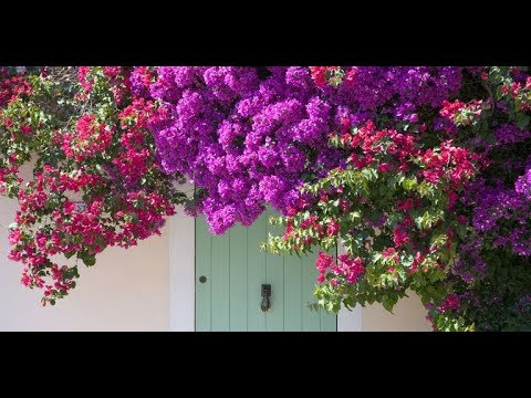 16 Fast-Growing Flowering Vines – Best Wall Climbing Vines to Plant