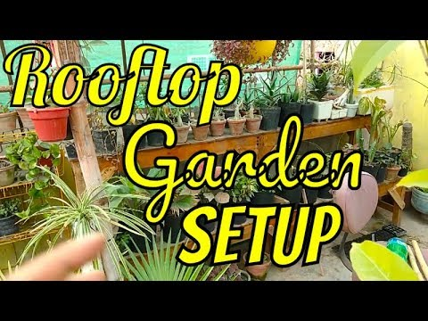Want Rooftop Garden ? Rooftop Gardening Basic Information for All  Beginners