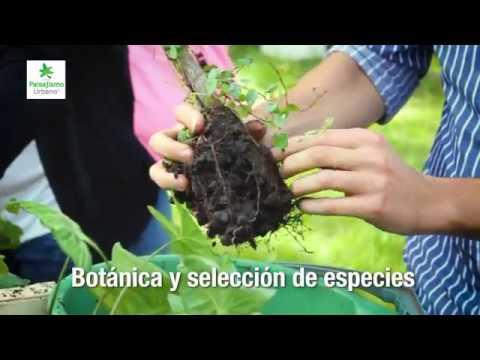 Curso Profesional de Jardines Verticales y Muros Verdes