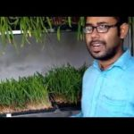 Hydroponic grass cultivation in bangladesh | Hydroponic grass farming easily in Bangladesh