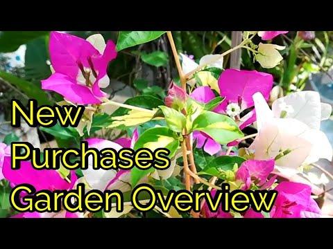 New Purchase Of Garden Decor Plants Sunday Update Garden Overview 23/2/20