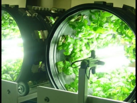 Hydroponics for Starter