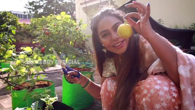 srireddy's beautiful vegetable garden vlog