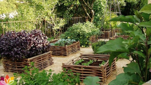 Vegetable gardening ideas arround the home