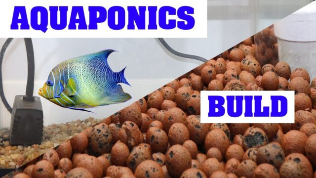 How To Build an Aquaponics System For Indoor Gardening