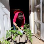 How to Move a Green Stalk Vertical Planter