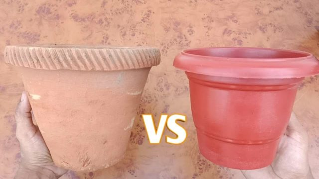 Terracotta vs Plastic Pots for Beginners | Gardening Lessons | Gardening School
