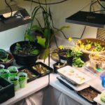 Grow Room | Indoor Gardening and Instagram Giveaway! PNW Zone 8b