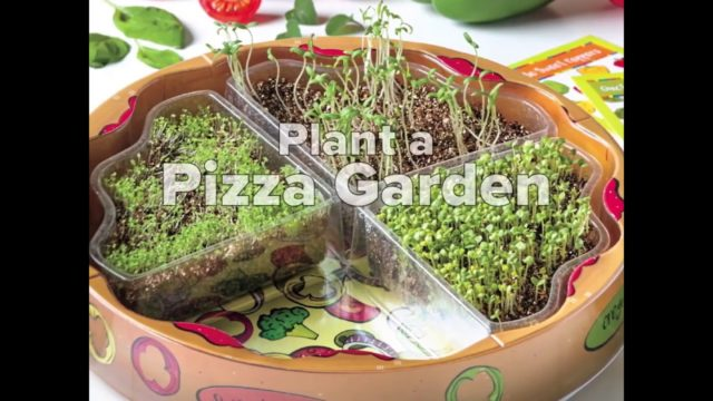 Creativity for Kids Plant Pizza Garden Kit Available At JR Toy Company