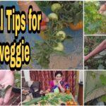 ఇవాళ కోసిన ప్రతి కూరగాయకి ఒక టిప్స్ చెప్తాను #Vegetable gardening  #Vegetable harvest #organic